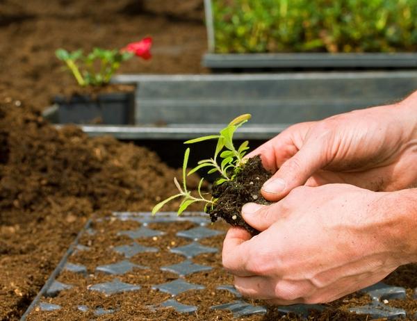 Gärtner Zierpflanzenbau
